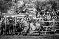 Miles City Bucking Horse Sale 2017